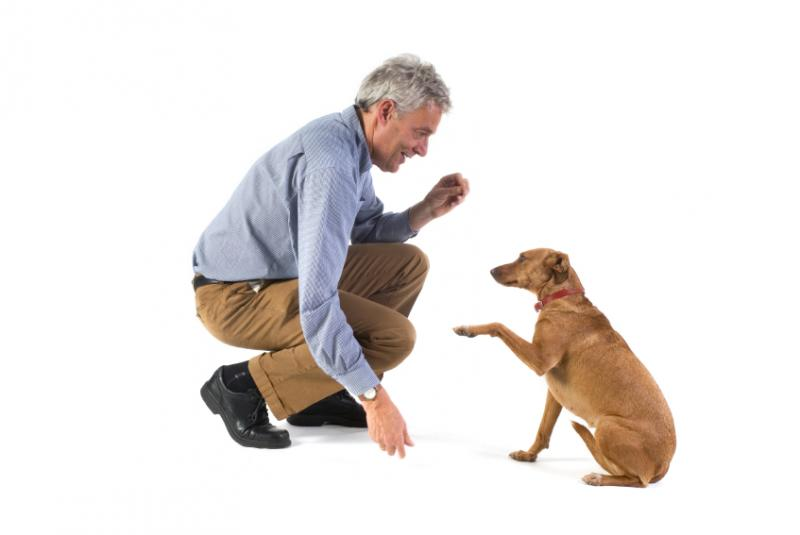 Stop Dog Barking And Scratching For Attention